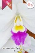 画像2: 【星型の紅白色カトレア】Lcr.Village Chief Parfum 'Snowy Crystal'(交配種)カトレア ヴィレッジチーフパルファム'スノーウィークリスタル' (2)